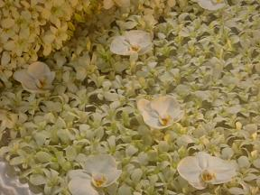 フラワードーム2008他 327.jpg