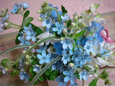 今月の花 001.jpg