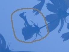 コスモスの妖精.jpg