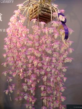 フラワードーム2008他 124.jpg